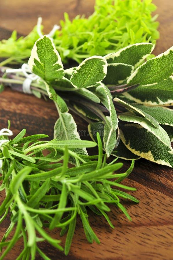 Grupos de ervas frescas imagens de stock