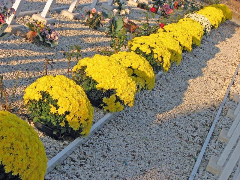 Grupos de flores amarelas nas sepulturas do cemitério imagem de stock royalty free