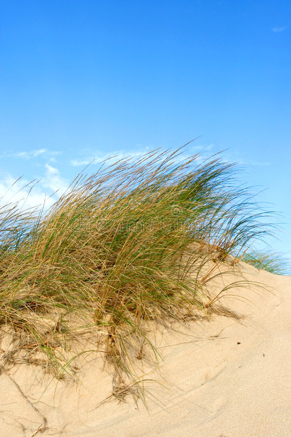Grupos de grama do mar fotografia de stock