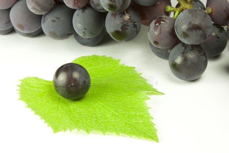 Grupos de uvas fotografia de stock