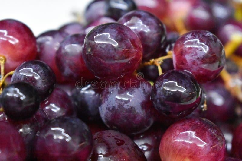 Grupos de uvas vermelhas maduras frescas Uvas do vinho tinto imagem de stock