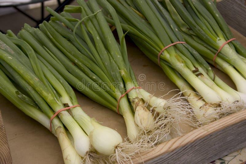 Grupos frescos da cebola verde fotos de stock