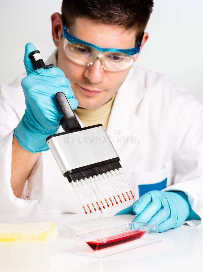 Grupos novos do biólogo - acima da reação imagens de stock