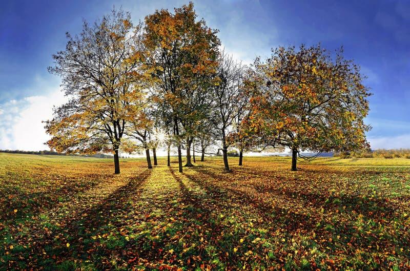 grupowi jesień drzewa zdjęcia stock