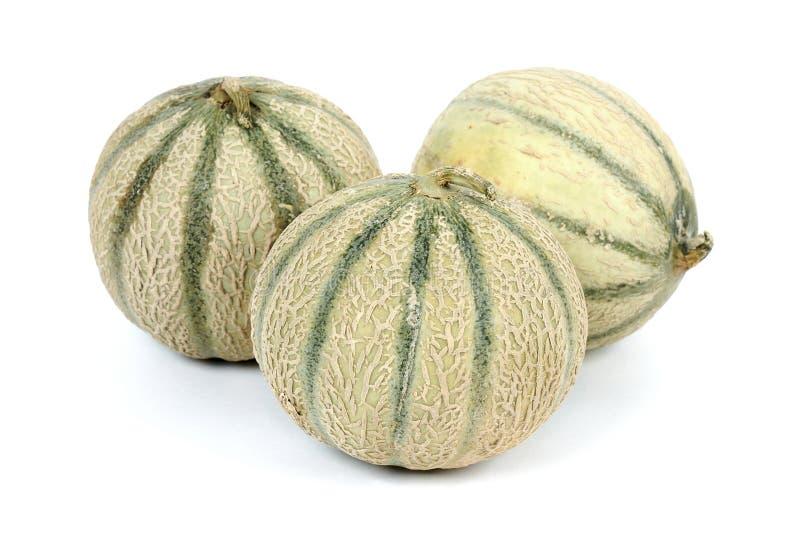 grupowy kantalupa melon fotografia royalty free