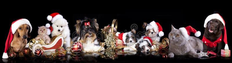 Grupowy pies i kot i kitens jest ubranym Santa kapelusz zdjęcia royalty free