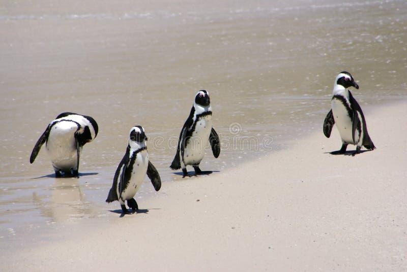 grupowy pingwin obraz stock