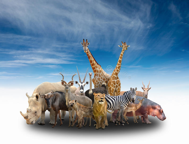 Grupp av africa djur royaltyfria foton