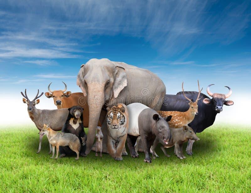 Grupp av asia djur royaltyfri fotografi
