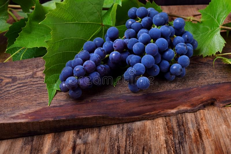 Grupp av blåa Isabella druvor royaltyfri bild