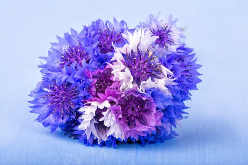 Grupp av blåklinter i blått, lilor och vit fotografering för bildbyråer
