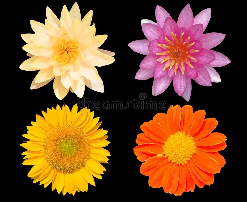 Grupp av blommor som isoleras över svart bakgrund royaltyfria foton