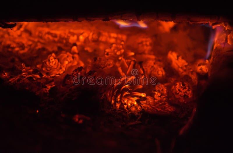 Grupp av brinnande grankottar på natten fotografering för bildbyråer