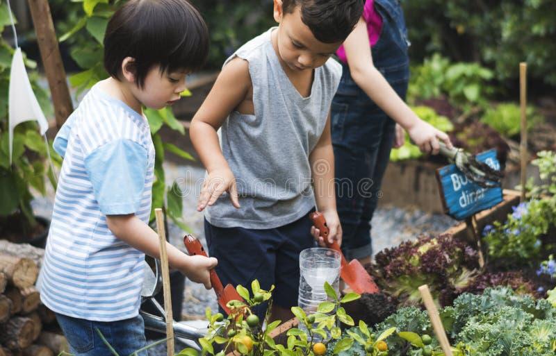 Grupp av dagisungar som lär att arbeta i trädgården utomhus arkivbild