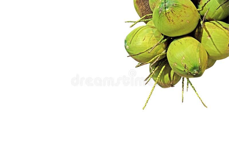 Grupp av den nya kokosnöten på vit bakgrund, snabb bana arkivfoto
