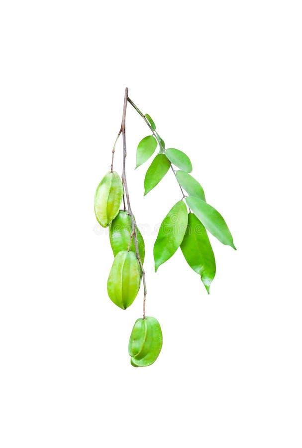 Grupp av den nya stjärnacarambolaen för tropisk frukt eller averrhoacarambolaen med stammen och gröna sidor som isoleras på vit b fotografering för bildbyråer