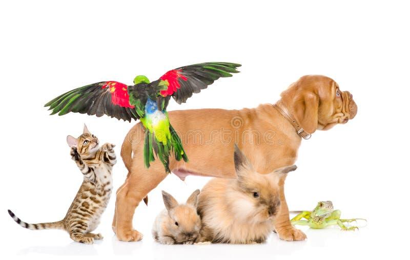 Grupp av exotiska husdjur bakgrund isolerad white arkivfoto