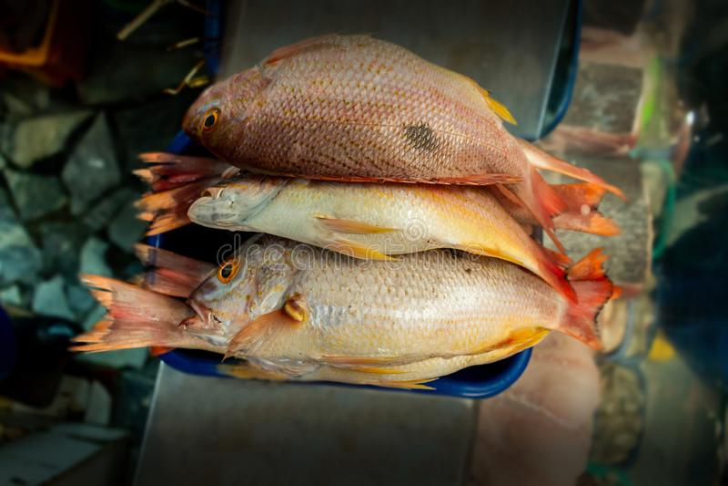 Grupp av fisken som visas i en marknad med unfocused bakgrund arkivfoton
