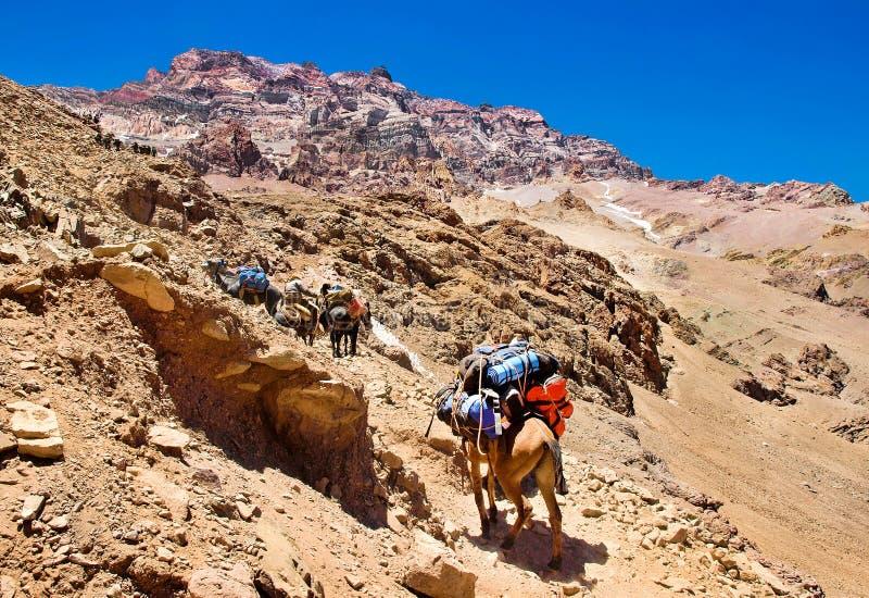 Grupp av fotvandrare som trekking i Anderna, Argentina royaltyfria bilder