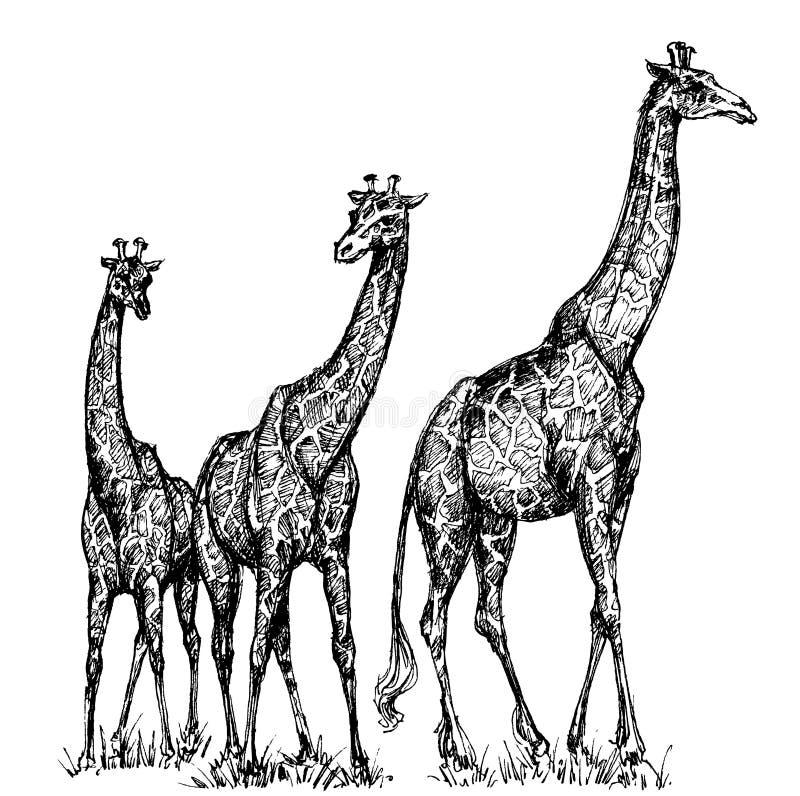 Grupp av giraff stock illustrationer