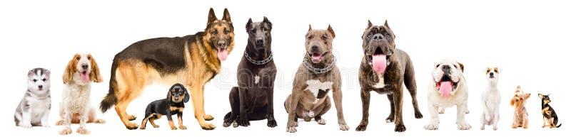 Grupp av gullig hundkappl?pning royaltyfri fotografi