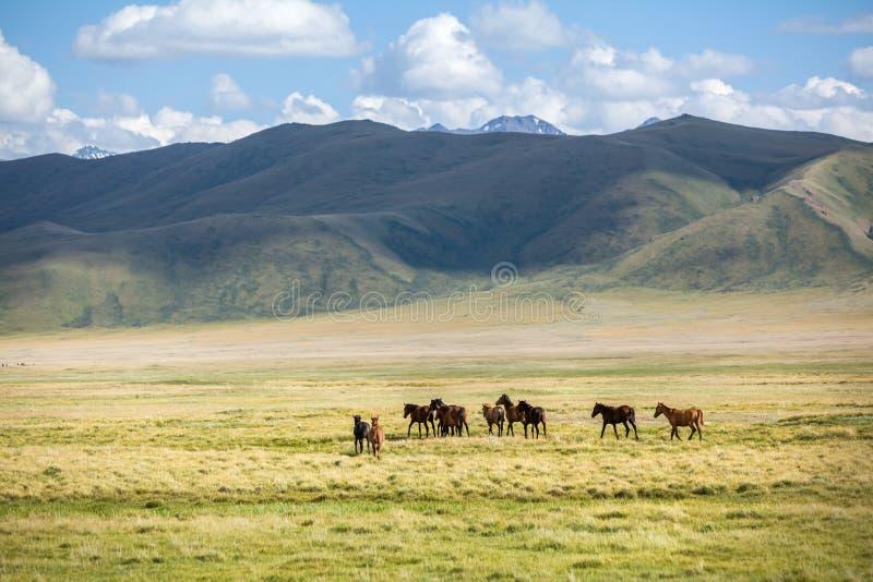 Grupp av hästar som bort går royaltyfri bild