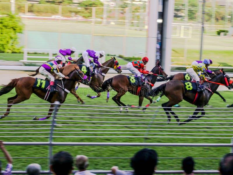 Grupp av hästar som laddar för mållinjen under att springa dag i Bangkok Thailand royaltyfri bild