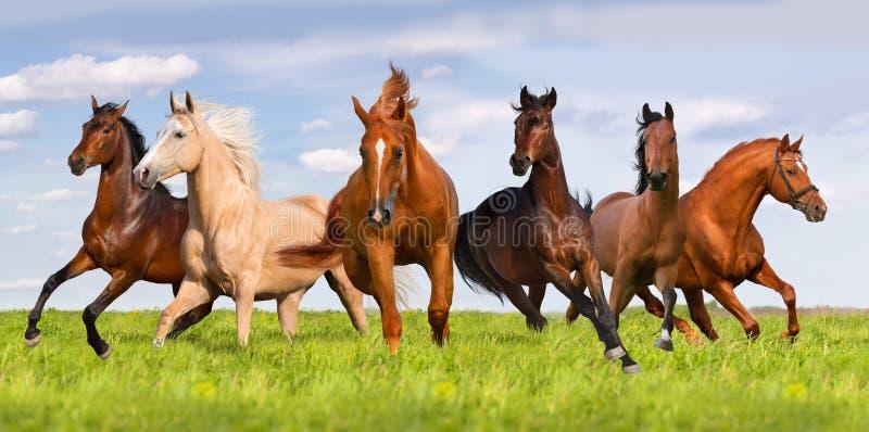 Grupp av hästkörningen fotografering för bildbyråer