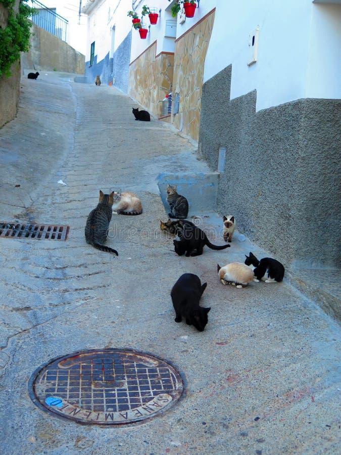 Grupp av hemlös tillfällig kattmatning arkivfoton
