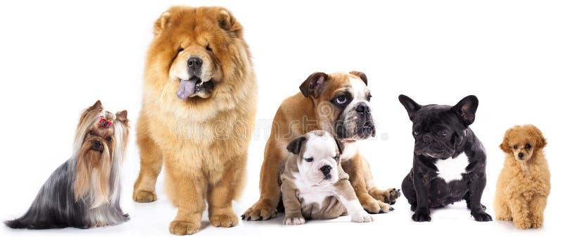 Grupp av hundar arkivfoton