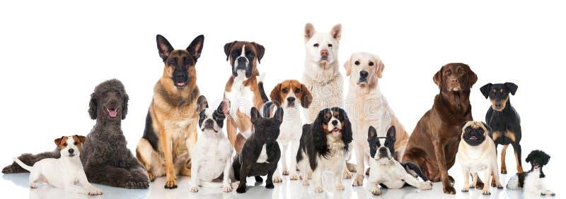 Grupp av hundkapplöpning arkivfoton