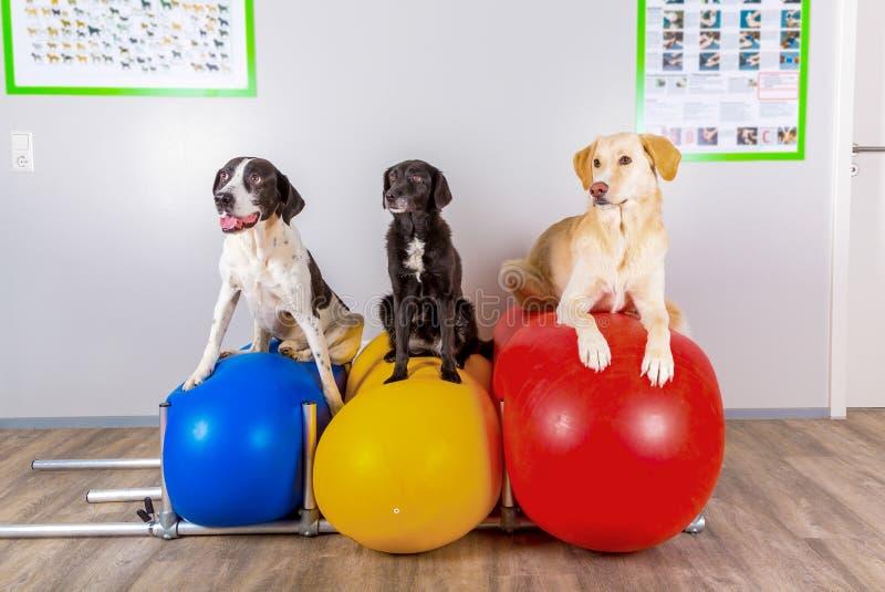 Grupp av hundkapplöpning i veterinärkontor arkivfoto