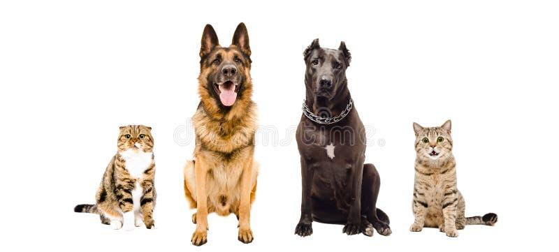 Grupp av hundkapplöpning och katter som tillsammans sitter royaltyfria foton
