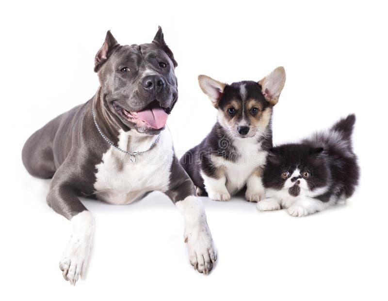 Grupp av hundkapplöpning och kitens arkivbild