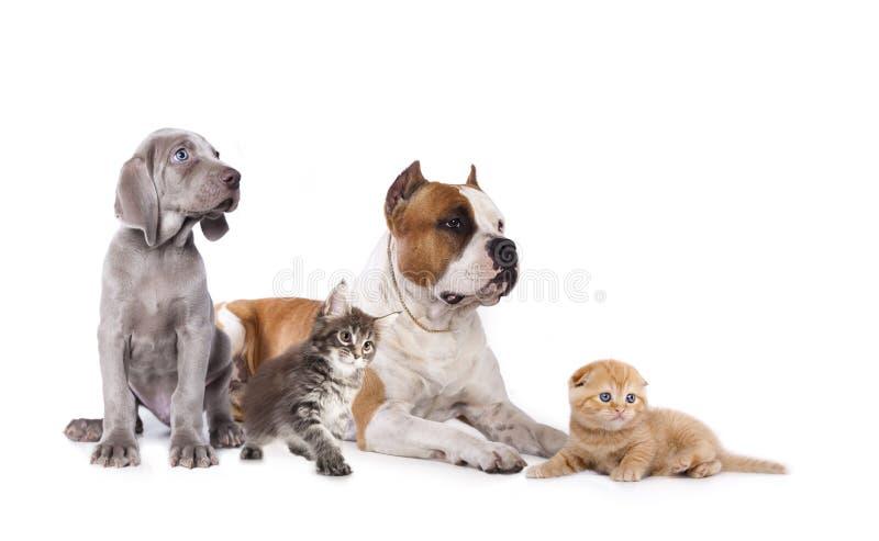 Grupp av hundkapplöpning och kitens royaltyfri bild