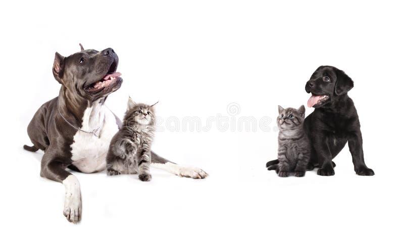 Grupp av hundkapplöpning och kitens arkivfoto