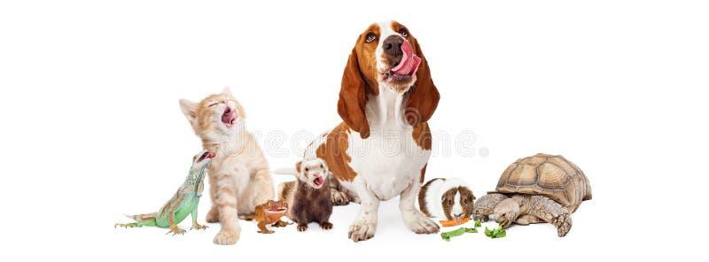 Grupp av hungriga inhemska husdjur royaltyfria foton