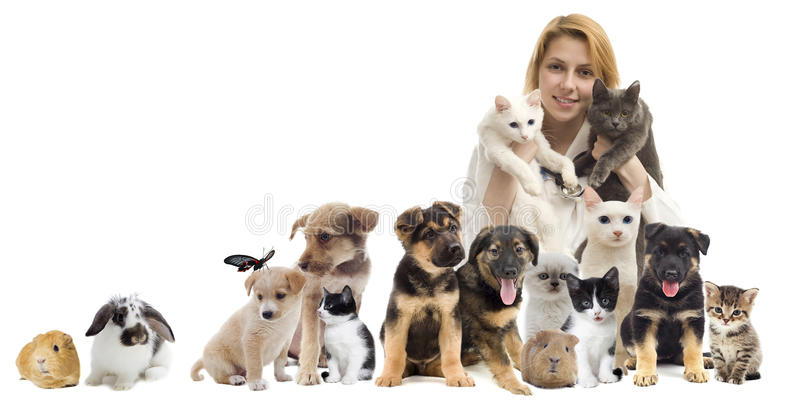 Grupp av husdjur royaltyfria foton