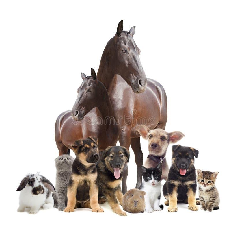 Grupp av husdjur fotografering för bildbyråer