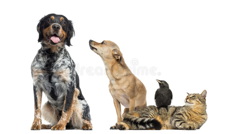 Grupp av husdjur som isoleras royaltyfria foton