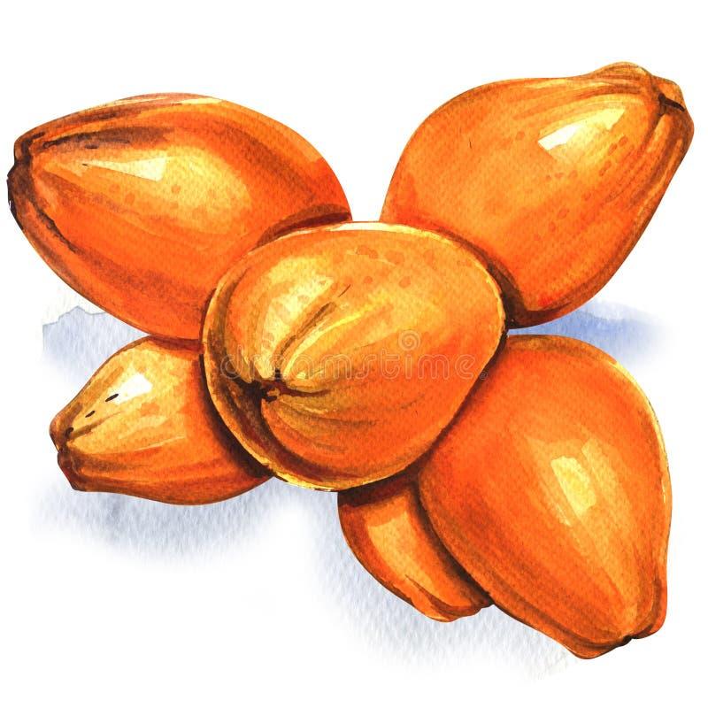 Grupp av isolerade gula kokosnötter, vattenfärgillustration på vit stock illustrationer