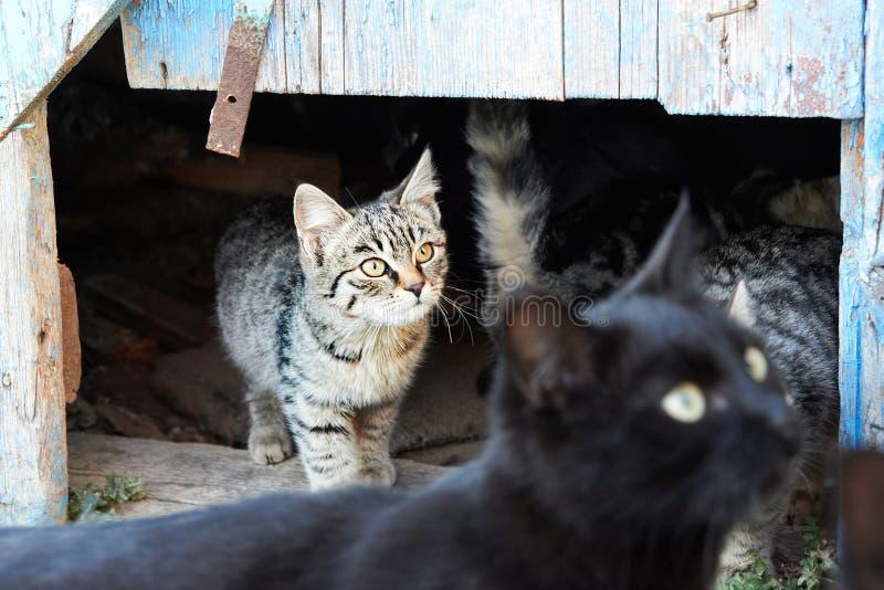 Grupp av katter royaltyfria foton