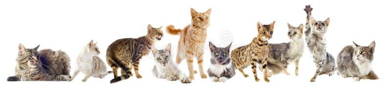 Grupp av katter royaltyfri foto