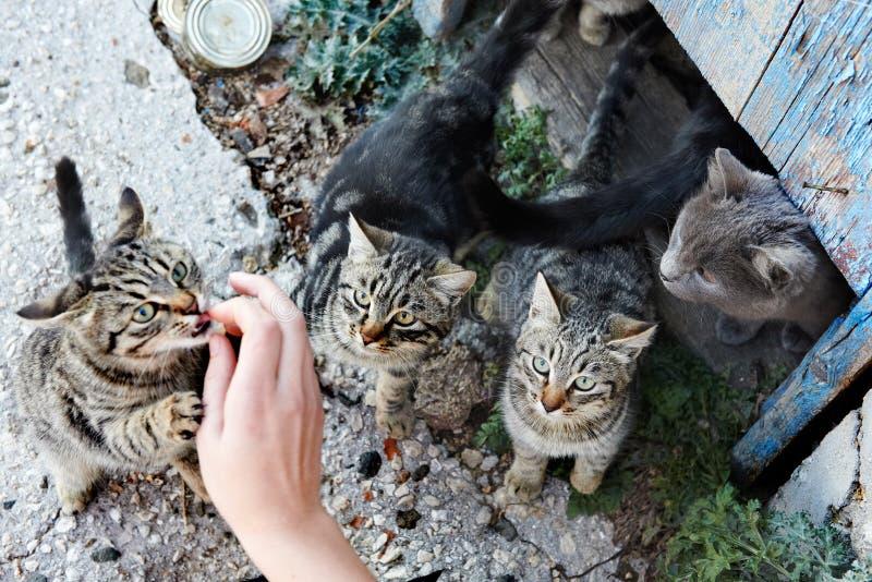 Grupp av katter arkivfoto