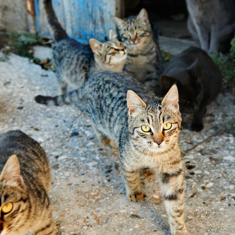 Grupp av katter arkivfoton
