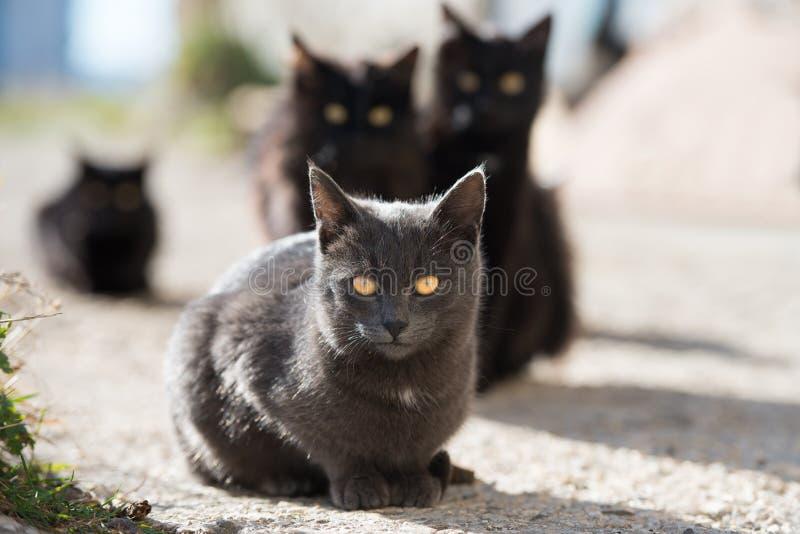 Grupp av katter royaltyfri bild