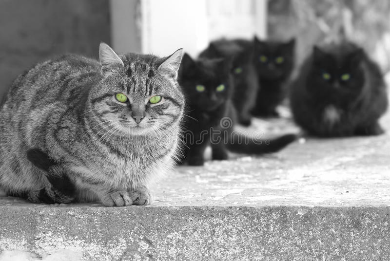 Grupp av katter fotografering för bildbyråer