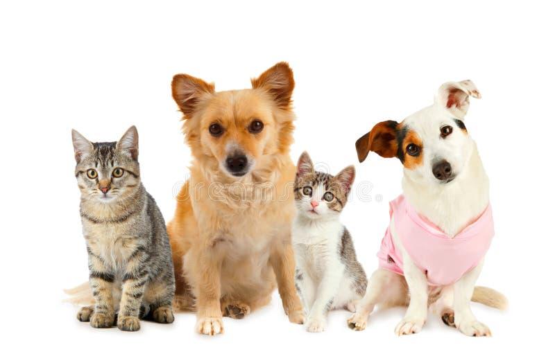 Grupp av katter och hundar arkivbild