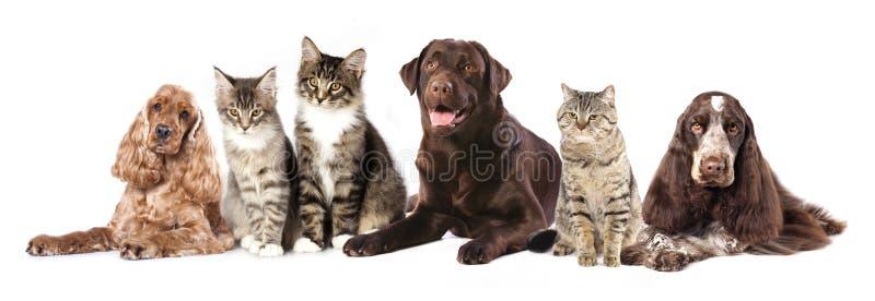 Grupp av katter och hundkapplöpning fotografering för bildbyråer