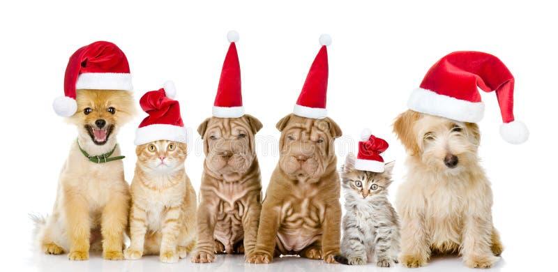 Grupp av katter och hundkapplöpning i röda julhattar Isolerat på vit royaltyfri bild